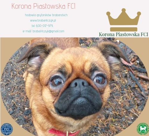 Korona Piastowska FCI